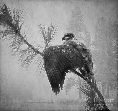Eagle Photograph - Where The Eagle Flys  by Beve Brown-Clark Photography