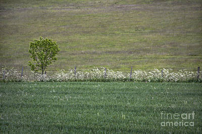 Royalty-Free and Rights-Managed Images - Where The Grass Is Greener by Evelina Kremsdorf