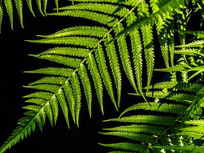 Flowers Photograph - Where The Green Fern Grows by Louis Dallara