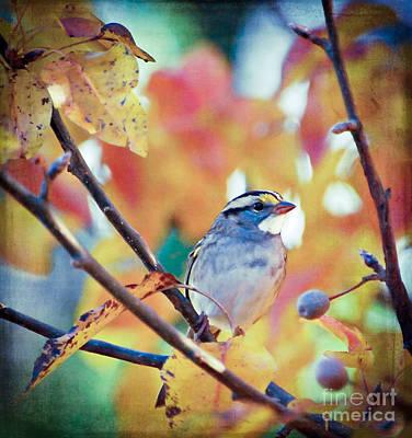 Sparrow Photograph - Where The Joy Is by Kerri Farley