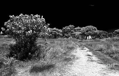 Paphos Photograph - Where The Path Leads by John Rizzuto