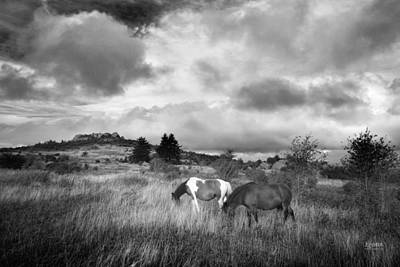 Photograph - Where The Wild Ponies Are by Steven Llorca