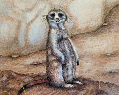 Meerkat Drawing - Where'd Everybody Go ? by Jo Prevost