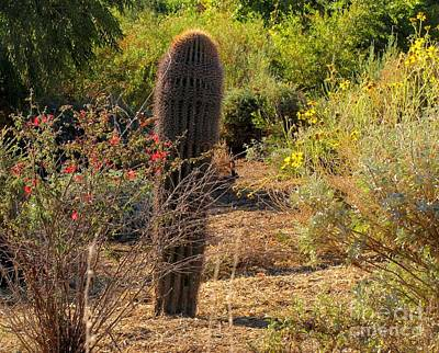Desert Jackrabbit Photograph - Where's Jack by Marilyn Smith