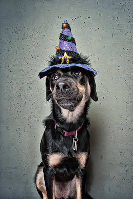 Funny Dog Photograph - Which Witch? by Chad Latta