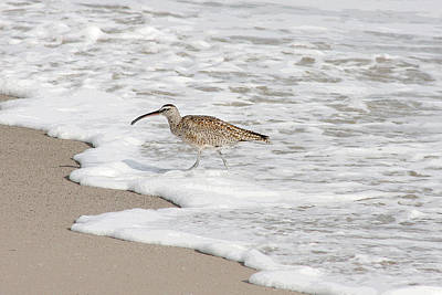 Bob Wade Photograph - Whimbrel Wading by Bob and Jan Shriner