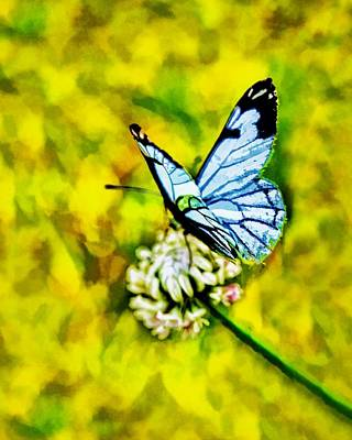 Butterfly On Blue Flower Painting - Whimsical Butterfly On A Flower by Tracie Kaska