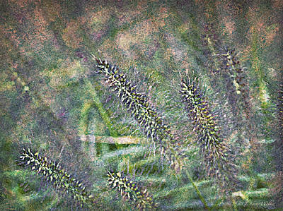 Digital Art - Whimsical Foxtail Grass by J Larry Walker