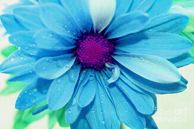 Blue Flowers Photograph - Whimsical Memories by Krissy Katsimbras