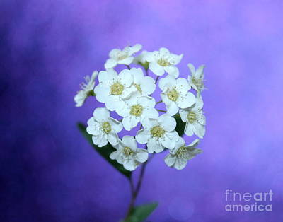 White Flower Photograph - Whimsical Nature by Krissy Katsimbras