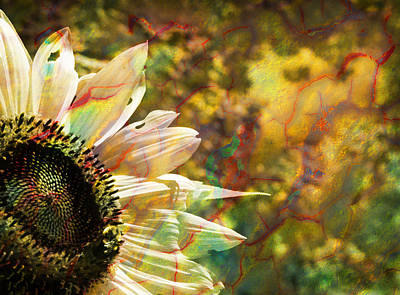 Photograph - Whimsical Sunflower  by Luke Moore