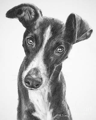 Drawing - Whippet Black And White by Kate Sumners
