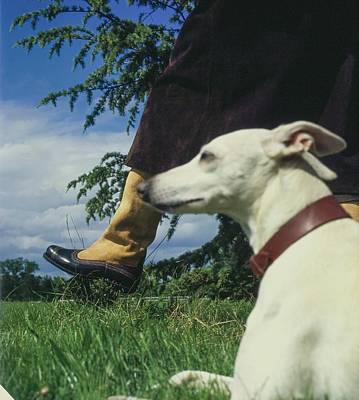 Photograph - Whippet Dog And Hubert De Givenchy by John Cowan
