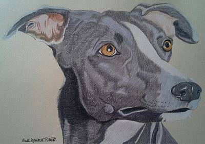 Drawing - Whippet - Grey And White by Anita Putman
