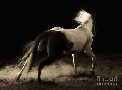 Photograph - Unbridled Spirit by Michelle Twohig
