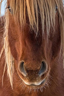 Forelock Photograph - Whiskers by Sandy Sisti