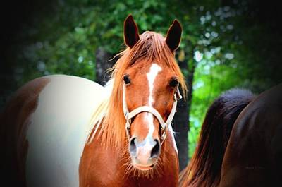 Photograph - Whiskers The Horse by Maria Urso