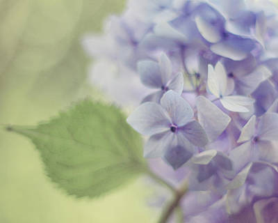 Purple Hydrangeas Photograph - Whisper by Amy Tyler