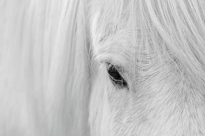 Iceland Horse Wall Art - Photograph - Whisper Of Iceland by John Fan