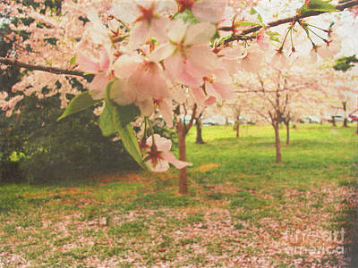 Whimsical Flowers Royalty Free Images - Whispering Cherry Blossoms Royalty-Free Image by Alys Caviness-Gober
