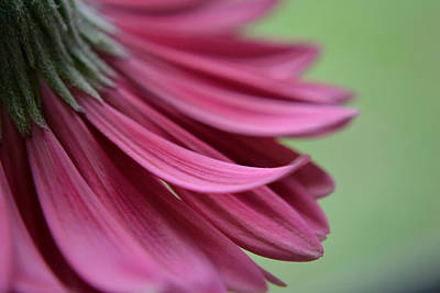 Whispering Petals Art Print by Melanie Moraga