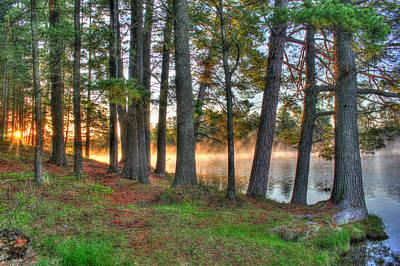 Whispering Pines Art Print