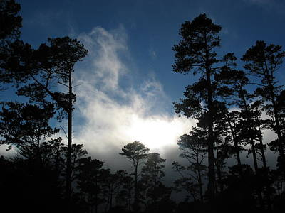Photograph - Whispering Pines by Derek Dean