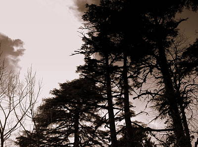 Whispering Trees Print by Salman Ravish