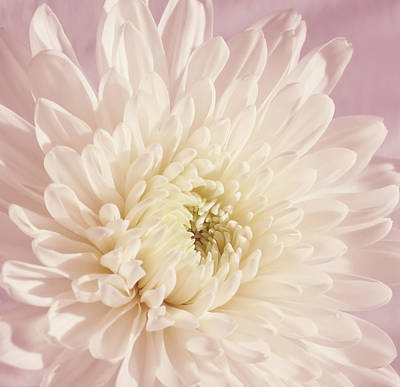 Whispering White Floral Art Print