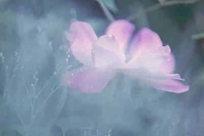 Photograph - Whispering Wild Rose by Jenny Rainbow