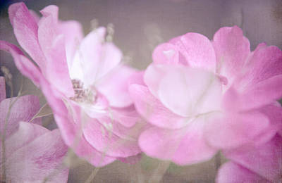 Photograph - Whispering Wild Roses by Jenny Rainbow