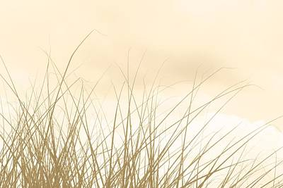 Photograph - Whispers In The Grass by Carolyn Jacob