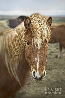 Animals Photos - Whispers In The Wind by Evelina Kremsdorf