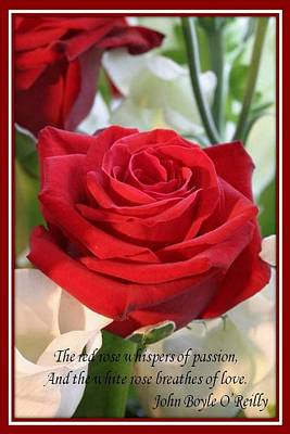Photograph - Whispers Of Passion And Love Red Rose Greeting Card  by Tracey Harrington-Simpson