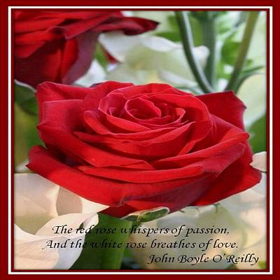 Photograph - Whispers Of Passion And Love Red Rose Greeting by Tracey Harrington-Simpson