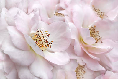 Photograph - Whispers Of Pink Roses by Jennie Marie Schell