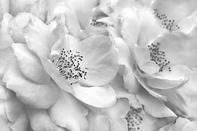 Photograph - Whispers Of Silver Roses  by Jennie Marie Schell