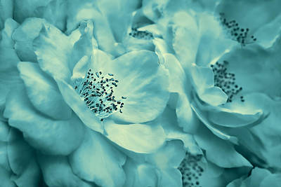 Photograph - Whispers Of Teal Roses by Jennie Marie Schell