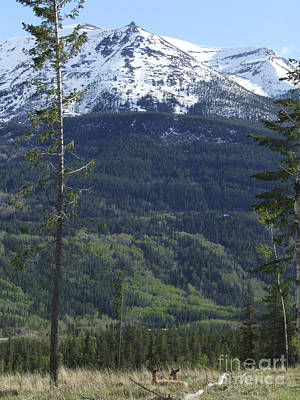 Photograph - Whistler - Jasper - Canada by Phil Banks