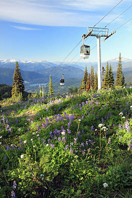 Photograph - Whistler Summer With Alpine Flowers by Pierre Leclerc Photography