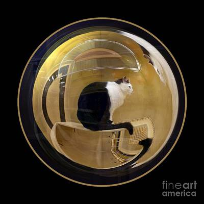 Photograph - Whistler's Cat by Renee Trenholm