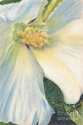Althea Painting - White Althea by Jan Gibson