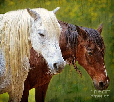 Whiteoaks Photograph - White And Brown Horse by Eva Thomas