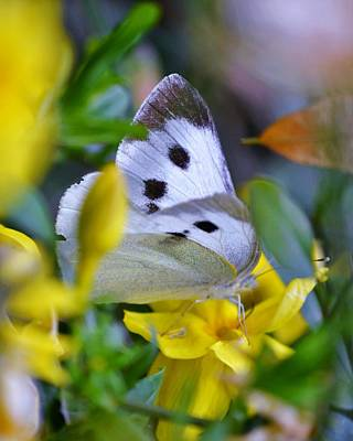 Photograph - White And Gold - Butterfly And Flowers by Kim Bemis