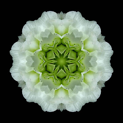 White And Green Begonia Flower Mandala Art Print by David J Bookbinder