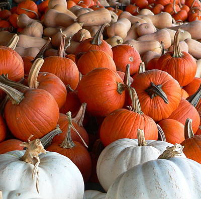 Photograph - White And Orange Pumpkins by Jeff Lowe