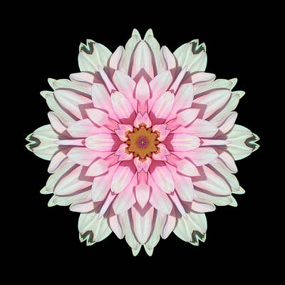 Photograph - White And Pink Dahlia I Flower Mandala by David J Bookbinder