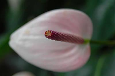White And Purple Flower Art Print