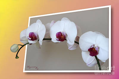 Digital Art - White And Violet Orchids by Mariarosa Rockefeller