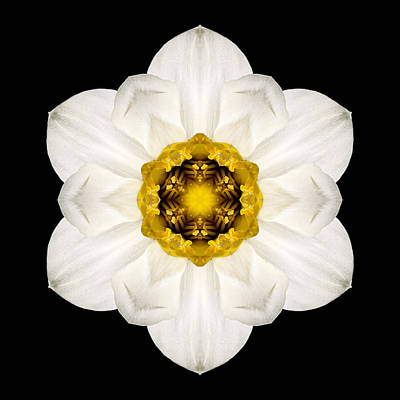 Photograph - White And Yellow Daffodil Flower Mandala by David J Bookbinder